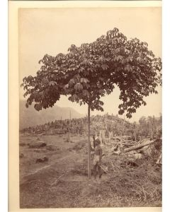 [Charles Scowen & Co. (attributed to)]. [Figure by a Tree].