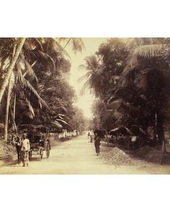 [Photographer unknown]. [Palm fringed road