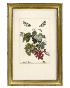 Jacob L'Admiral, Set of Six Insects, copper engraved plates, 1774 - 1