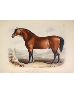 David Low, Domestic Animals of the British Isles, first edition, 1842 - 1