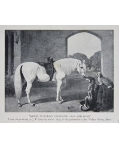 James Boucaut, The Arab the horse of the future, first edition, 1905. - 1