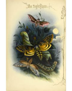 Henry Noel Humphreys, The Night-Flyers, first edition, circa 1860 - 1